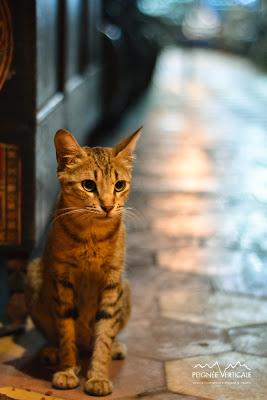 Maroc 2012 : Portfolio – Une histoire de chats