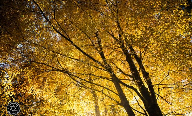 Un automne 2015 exceptionnel !