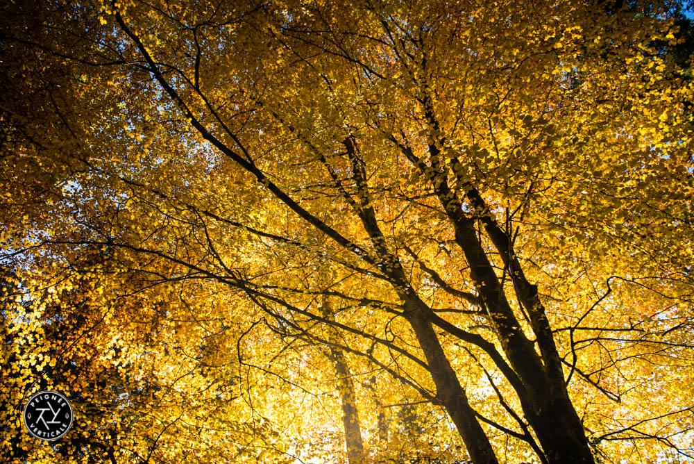Peignee-Verticale-Couleurs-automne-2015-9790