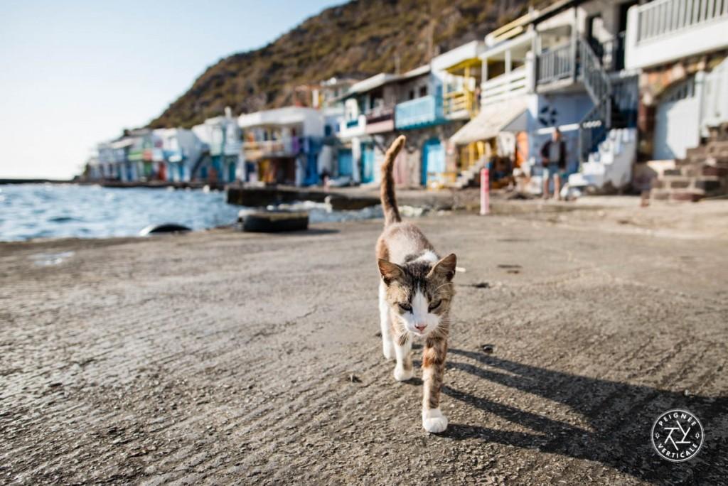Le gardien de Klima ! Les chats (errants) sont un sujet de photo intarissable en Grèce.