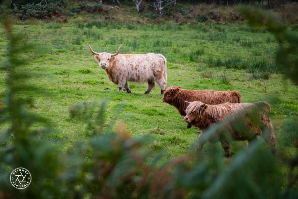 peignee-verticale-highlands-ecosse-1221