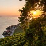 Patrimoine UNSECO Vignobles de Lavaux