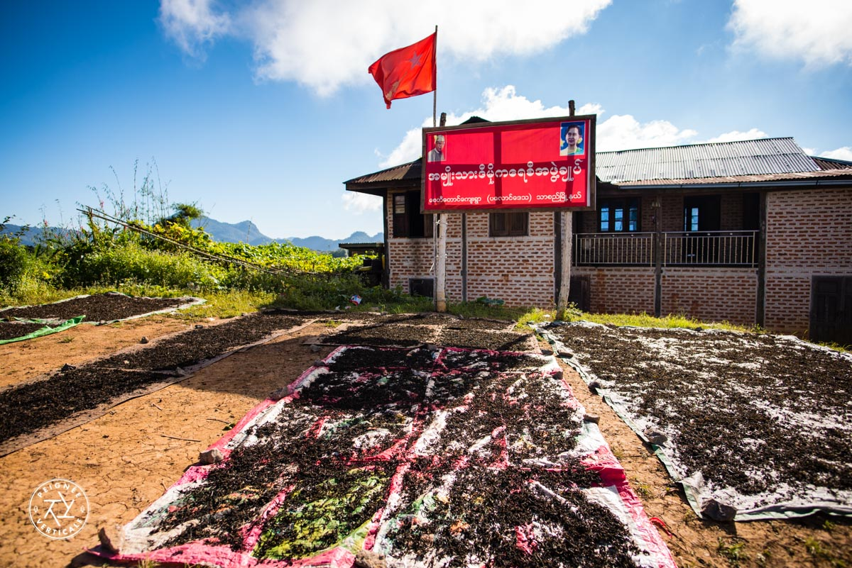 Séchage de feuilles de thé en Birmanie