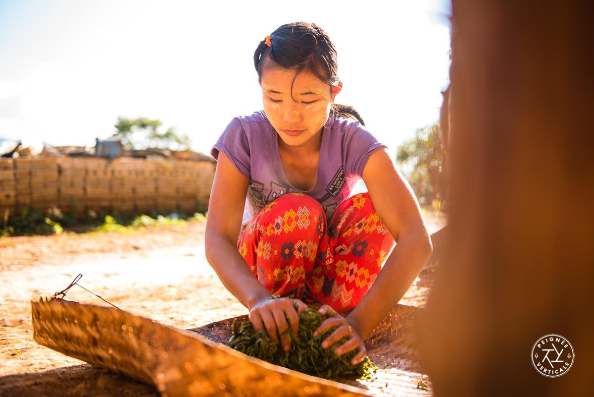 Culture birmane : les feuilles de thé