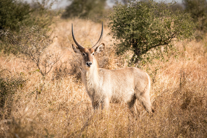 TOP 10 de nos conseils pour réussir vos photos de safari animalier