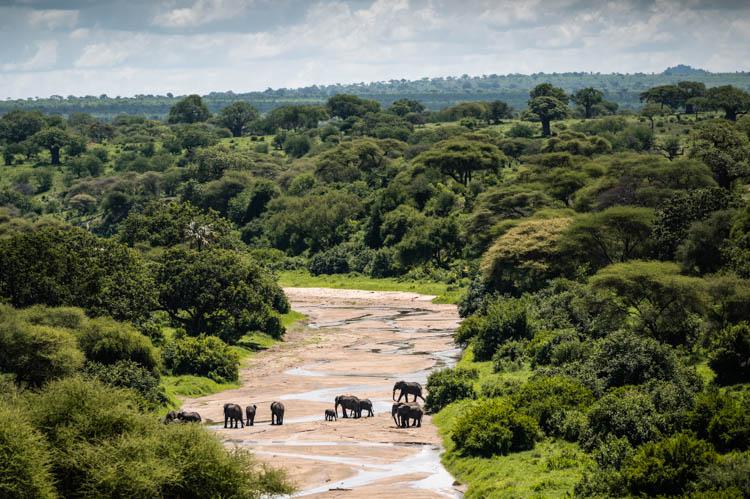 Famille d'éléphants traversant une rivière dans le Parc de Tarangire, Tanzanie. Format paysage.