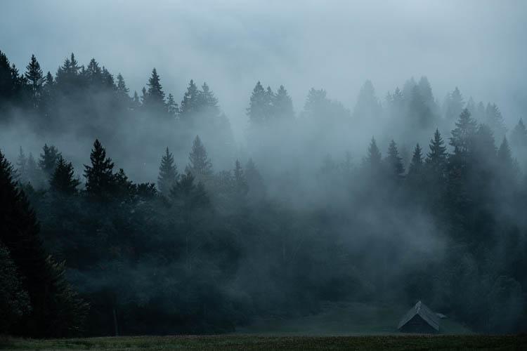 Forêt brumeuse, Slovénie. Format portrait.