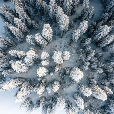 Forêt de la Feclaz